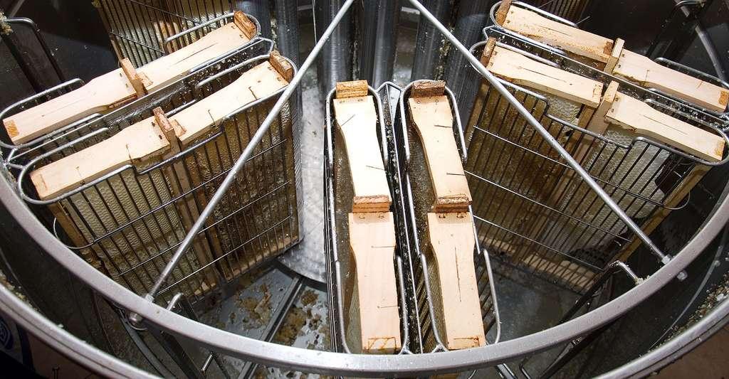 Bien choisir son matériel est important pour la récolte du miel. Ici, l'intérieur d'un extracteur à miel. © Shoot4pleasure, Shutterstock