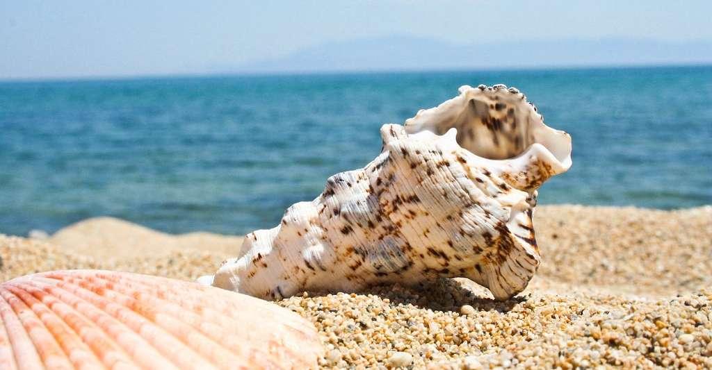 Si l'on croit entendre le bruit de la mer dans les coquillages, c'est parce que nous associons ces objets à nos vacances au bord de l'eau. © KRPhotography, Pixabay, CC0 Public Domain