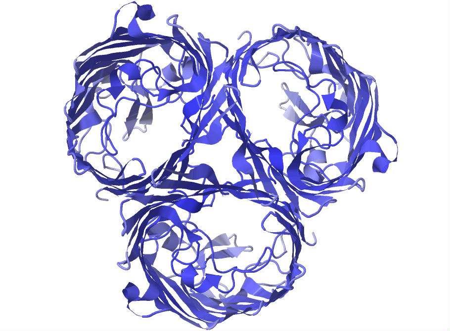Le récepteur OmpF représenté en 3D. Ce récepteur présent à la surface de la membrane d'Escherichia coli n'est habituellement pas la cible du bactériophage lambda. Mais le virus a su évoluer et s'en servir pour infester son hôte. © MSU