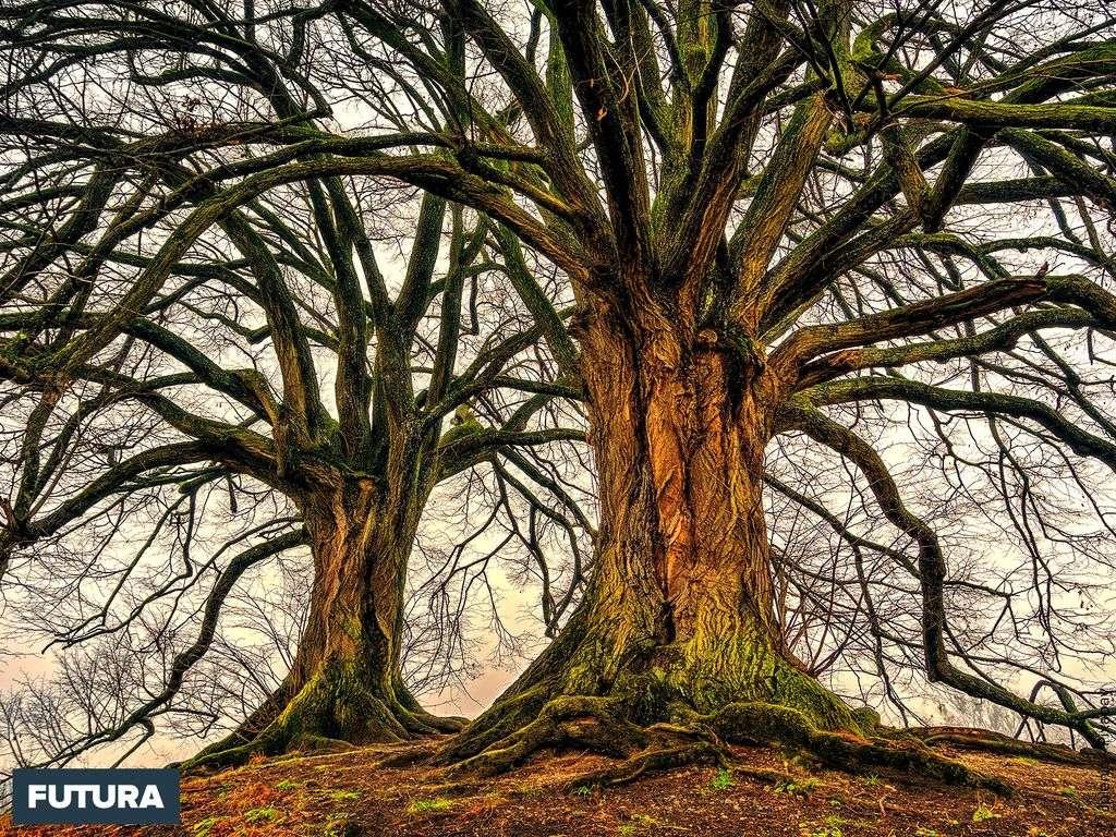 « Le plus grand arbre est né d'une graine menue. » LaoTseu