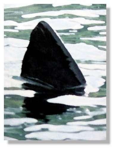 Dessin d'aileron de requin. © DR