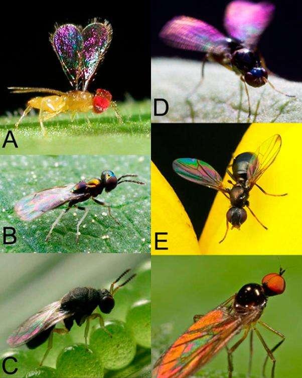 Dans la nature aussi les couleurs sont visibles et servent certainement de repères aux congénères. © Pnas