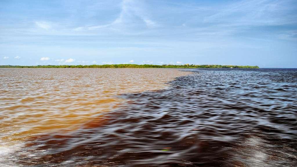 La rencontre des eaux du rio Solimões et du rio Negro
