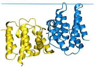 Protéine matricielle M1 du virus influenza. © 2006 Andrei Lomize, Mikhail Lomize et Irina Pogozheva