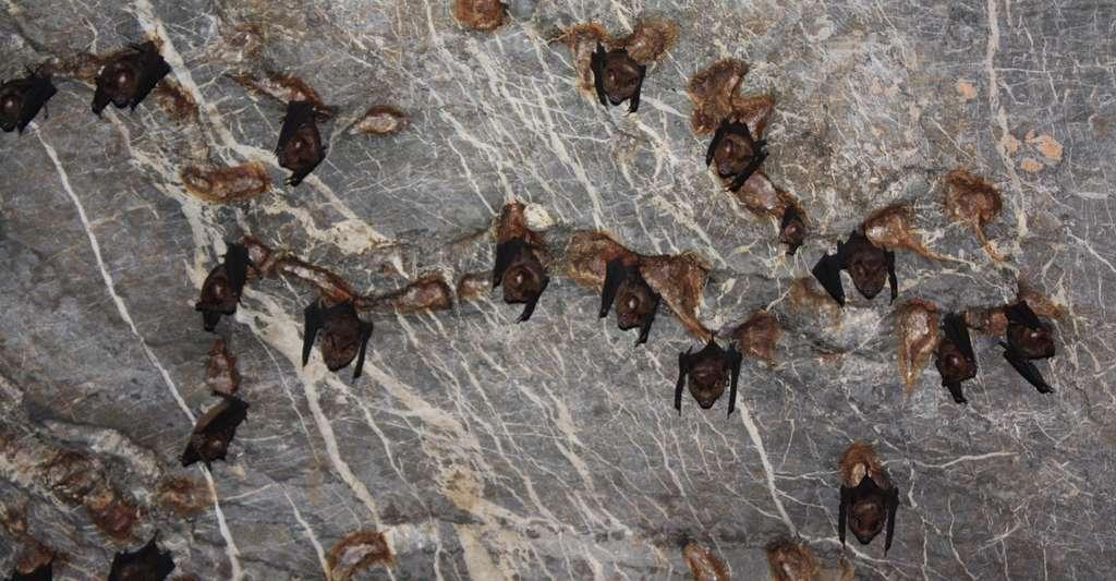 Les chauves-souris trouvent refuge dans les grottes. © Philippe, Fotolia