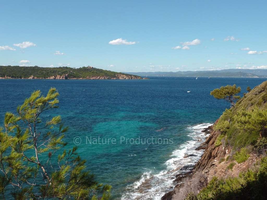 Le parc national de Port-Cros assure le suivi des populations de mérous. © S. Ruitton, DR
