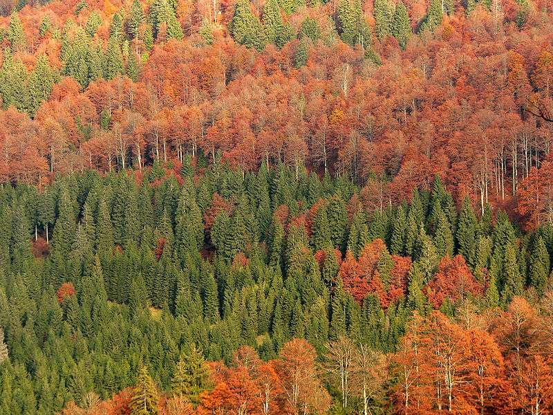 Italie : Forêt de Cansiglio