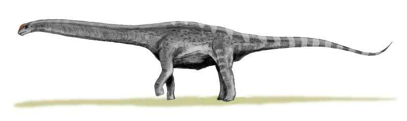 L'Argentinosaurus compte parmi les plus gros dinosaures. C'était un cousin de ce nouveau sauropode découvert dans le sud de l'Argentine, peut-être plus grand encore. © Nobu Tamura, Wikipédia, CC by-sa 3.0