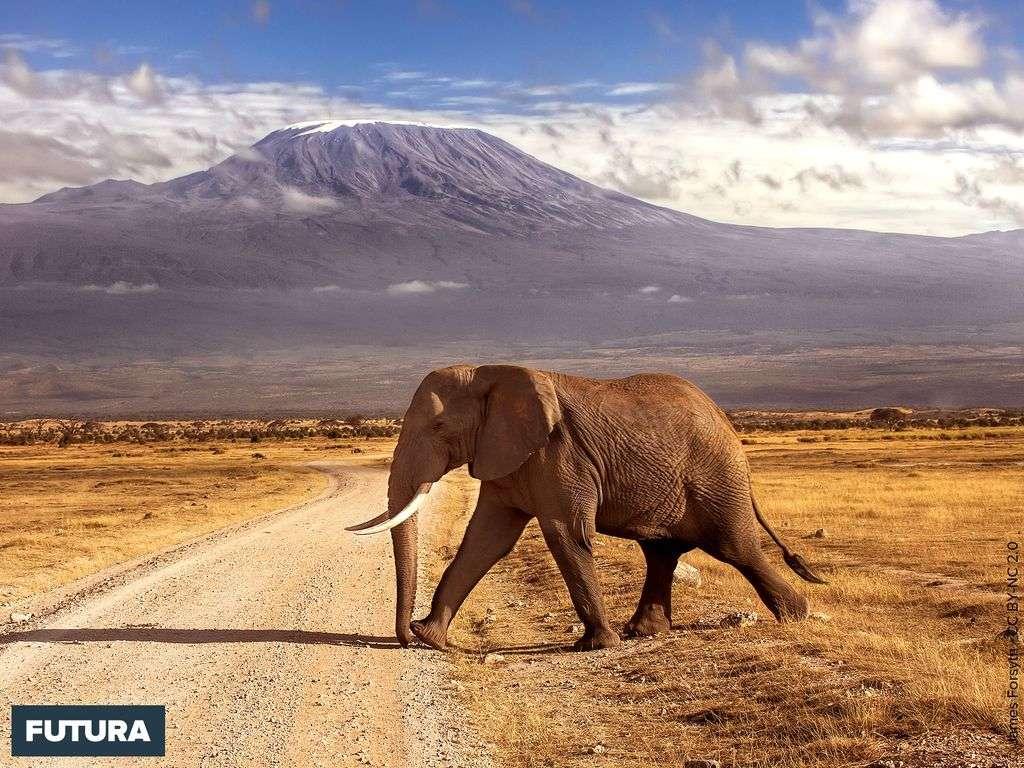 Eléphant Tanzanie