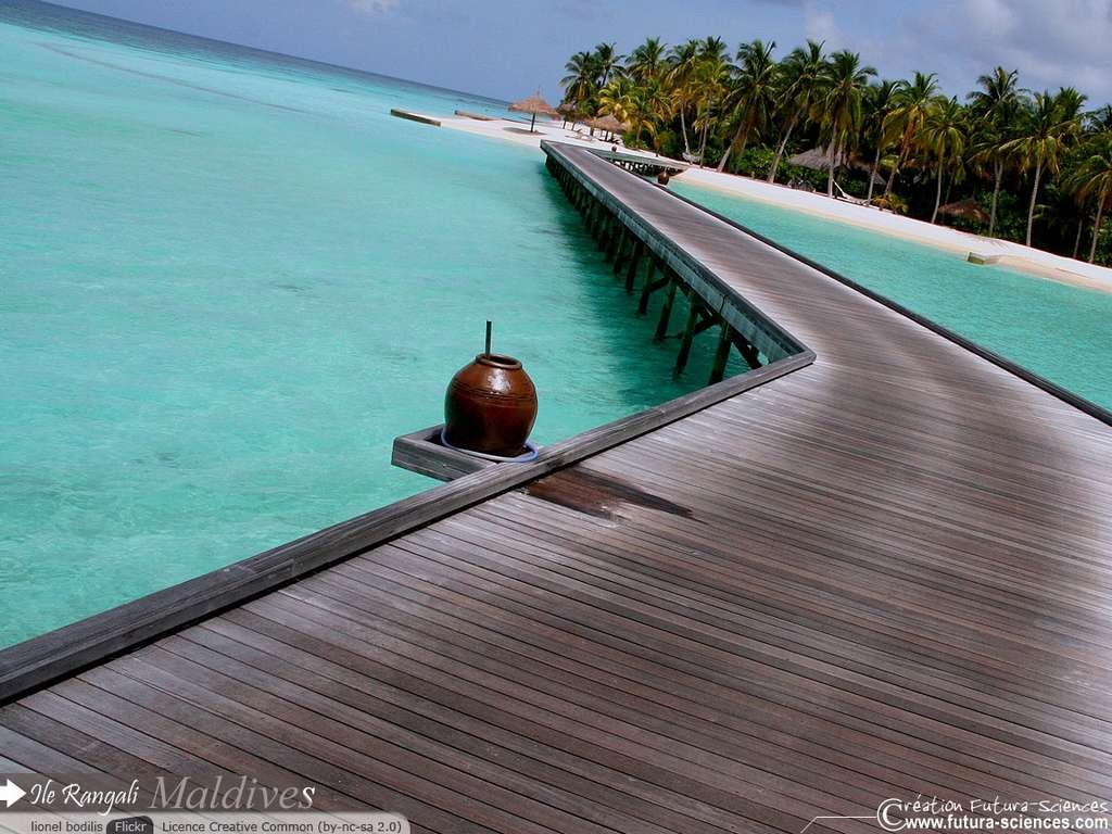 Ile Rangali - Maldives