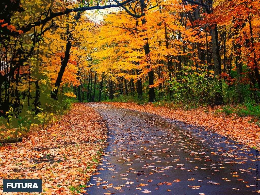 Or et marron l'automne