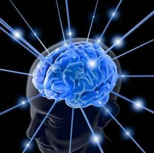 Comment fonctionne notre cerveau ?