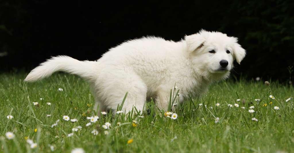 Certaines études prétendent que les chiens font leur besoin suivant le champ magnétique terrestre. Mais cela reste à prouver plus sérieusement. © Dogs, Fotolia