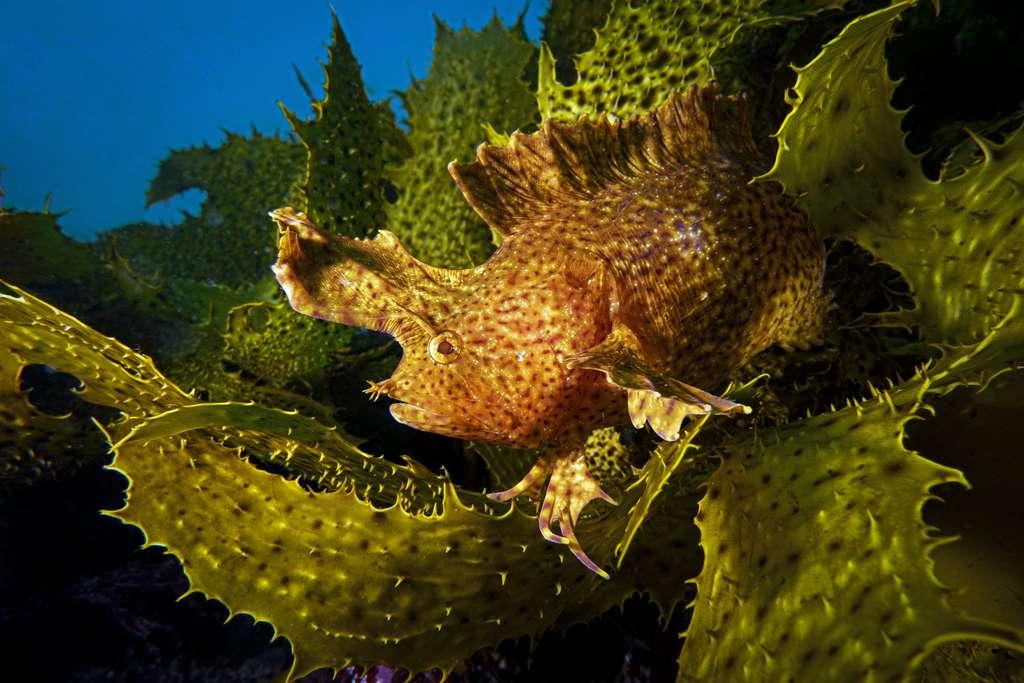 Camouflage (Australie). © Talia Greis, Ocean Art