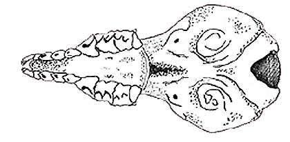 Crâne vu de dessous. © Toute reproduction et utilisation interdites