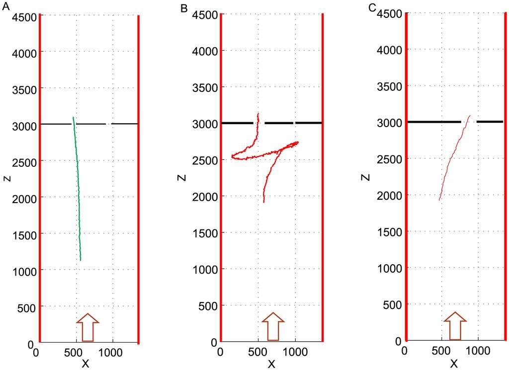 Exemples de vols d'oiseaux dans des tunnels expérimentaux. La largeur des passages à gauche et à droite était respectivement de 60 et 40 mm en A, 90 et 10 mm en B, ainsi que 0 et 100 mm en C. © Bhagavatula et al., Plos Computational Biology, 2014, cc by 4.0