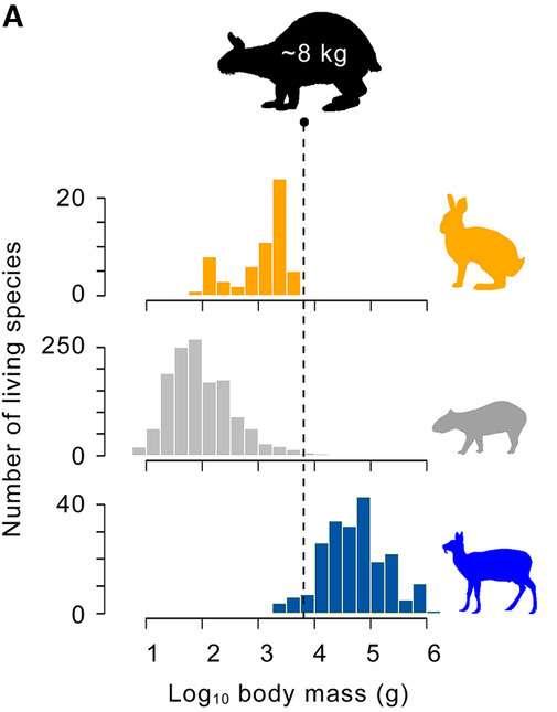 Distribution de la masse corporelle chez les lagomorphes, les rongeurs et les ongulés. © Susumu Tomiya et al., Evolution, 2021