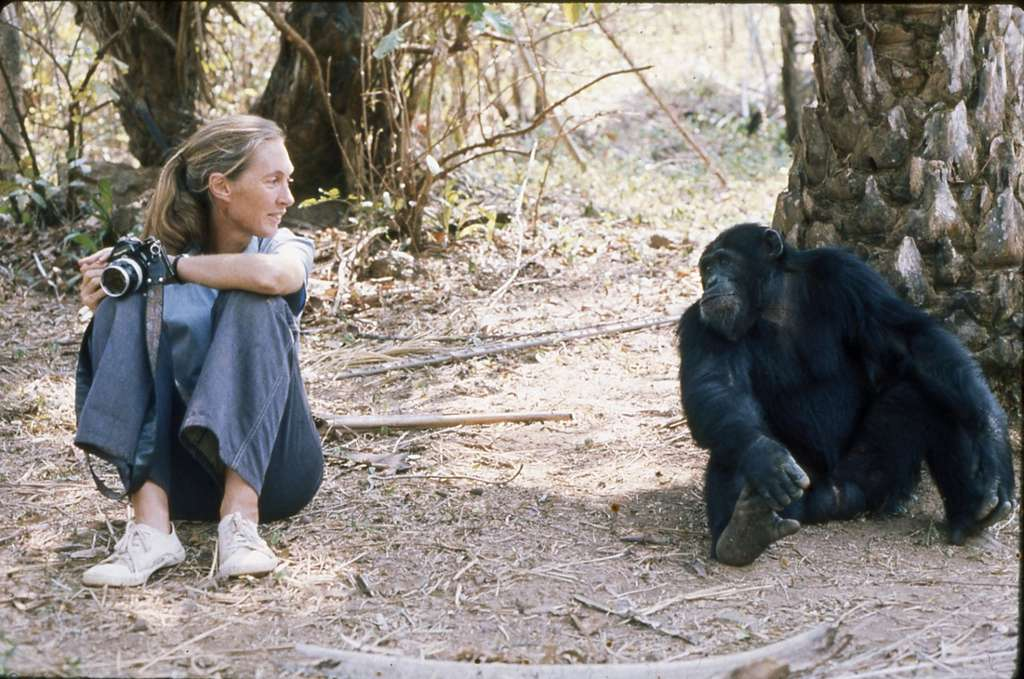 Instants complices ! © Institut Jane Goodall