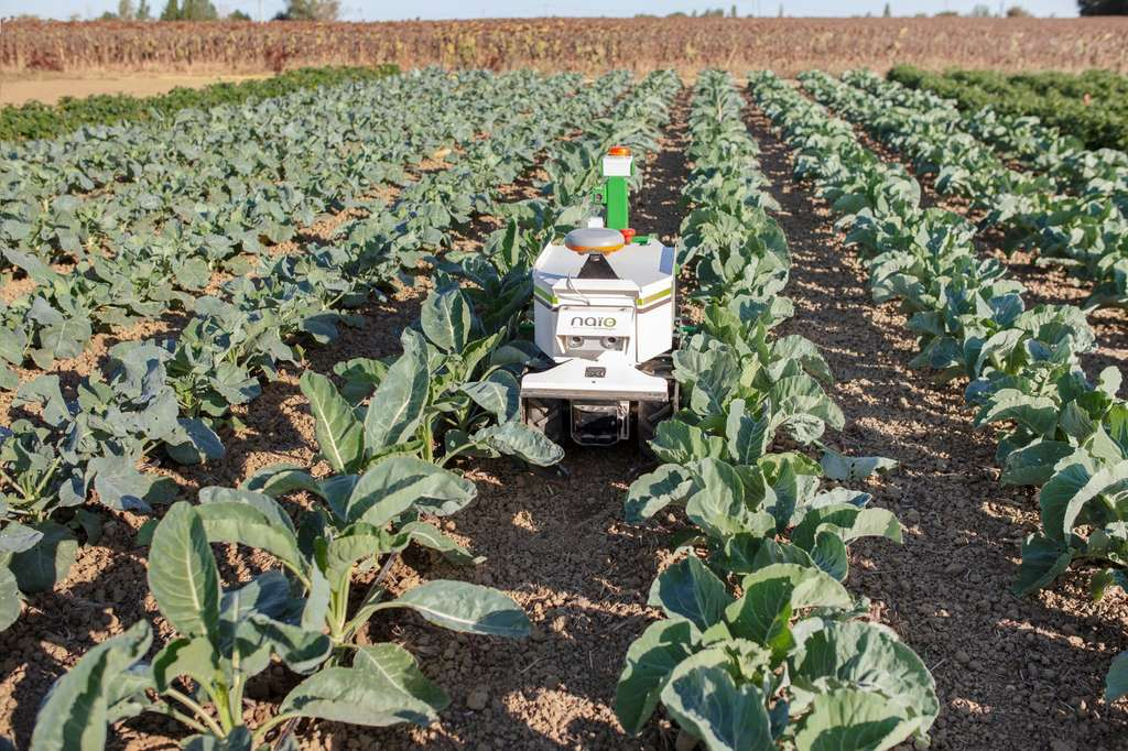 Les robots agricoles, des alliés de plus en plus fonctionnels. © Naïo Technologies