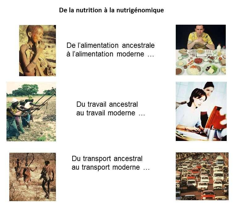 La nutrigénomique peut être vue comme un moyen d'adapter la nourriture au passage de l'Homme dans l'ère moderne. © DR