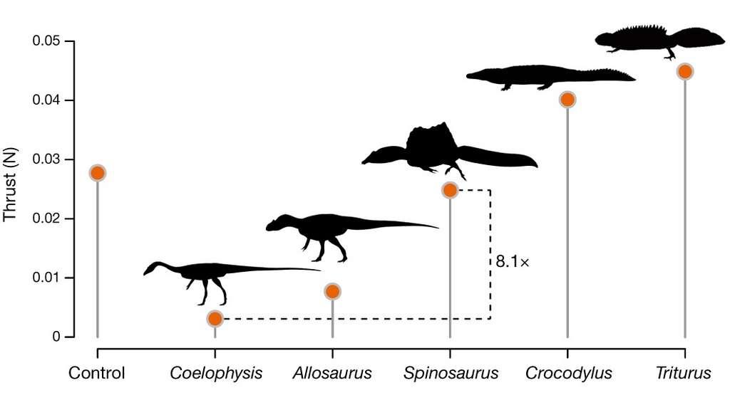 La queue de Spinosaurus aegyptiacus était huit fois plus puissante que celles d'autres dinosaures théropodes. © Nizar Ibrahim et al, Nature, 2020
