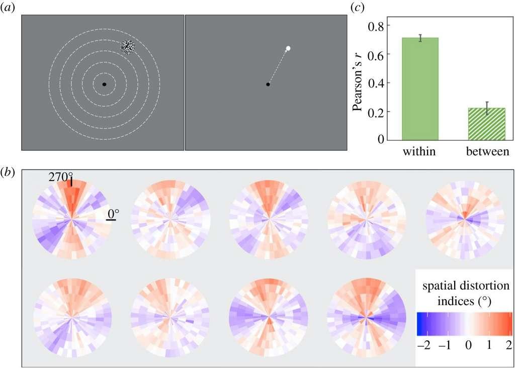 Dans cette expérience, les volontaires devaient pointer le curseur à l'endroit de la cible après sa disparition (a). Les diagrammes représentent la distorsion de leur champ de vision : en bleu, les zones où le champ de vision apparaît contracté — des zones différentes selon les individus —, en rouge, celles où il est dilaté (b). Les diagrammes (c) confirment le schéma unique de distorsion spatiale. © Zixuan Wang, Université de Californie