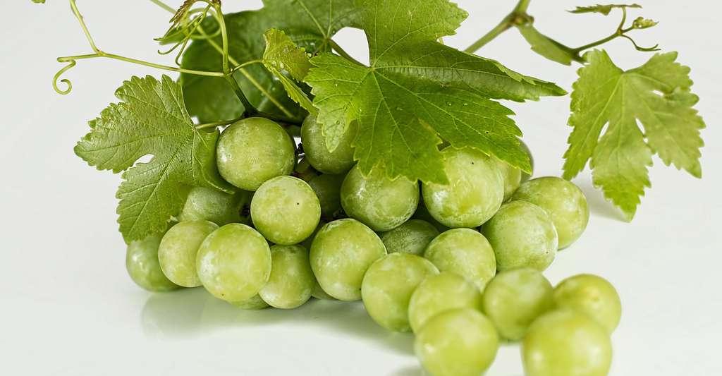 Le raisin a un pouvoir oxydant très élevé. © Stevepb - Domaine public