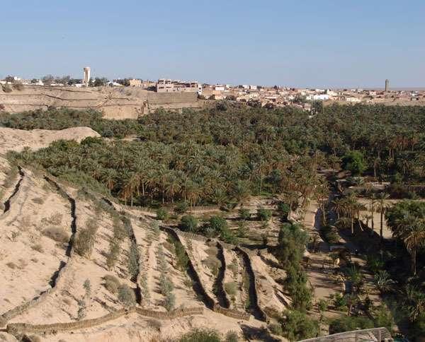 Une oasis en Tunisie. Les oasis se développent autour de sources naturelles. Aujourd'hui, nombre de sources se sont taries. © E. Delaitre, IRD