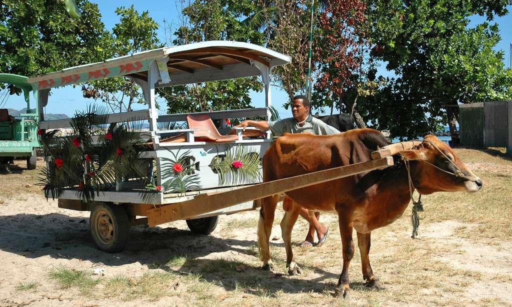 Charrette à bœuf à La Digue, aux Seychelles