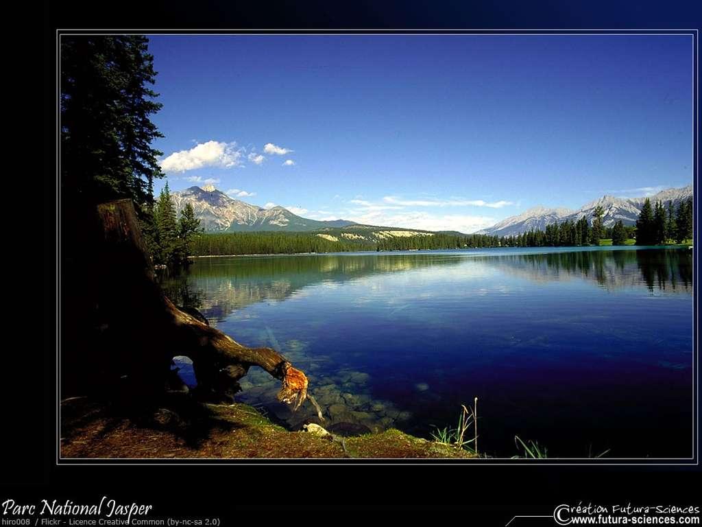 Parc National Jasper Canada