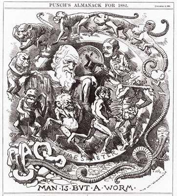 """""""L'homme n'est qu'un ver"""" : caricature de Darwin parue en 1882"""