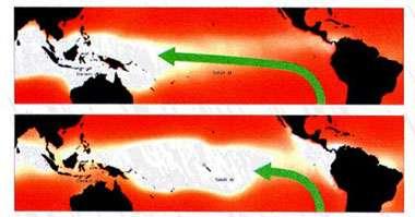 """Figure 2 Sir Gilbert Walker a fourni un élément important à la compréhension d'El Niño quand il découvrit que les pressions au niveau de la mer dans le Pacifique sud oscillaient entre deux états distincts. Pendant une phase d'indice haut de ce que Walker a dénommé """"Oscillation Australe"""" (en haut, pour novembre 1988), la pression est plus élevée (rouge sombre) près et à l'est de Tahiti que plus à l'ouest de Darwin. ce gradient de pression le long de l'équateur entraîne l'air vers l'ouest (flèche longue). Quand l'atmosphère bascule dans une phase d'indice bas (en bas, pour novembre 1982), les baromètres sont à la hausse dans l'ouest et à la baisse dans l'est, signalant une réduction, voire une inversion, de la différence de pression entre Darwin et Tahiti. L'aplatissement de cette structure de pression provoque l'affaiblissement des alizés de surface, et leur retrait vers l'est. On sait que cette phase d'indice bas est habituellement accompagnée de conditions El Niño."""