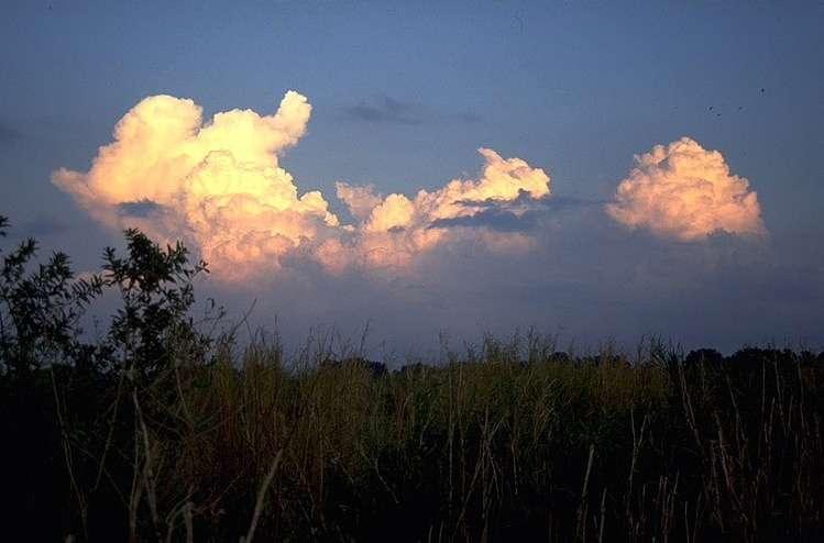 Nuages en forme de chou-fleur (cumulonimbus calvus et cumulus congestus)