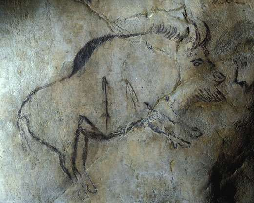 Fig. 5. Bison de la Caverne de Niaux (Ariège), directement daté de 12 890 BP ± 160 (Gif A 91319). La pérennité des thèmes et de certaines techniques à travers le Paléolithique supérieur est évidente. © Cliché J. Clottes. Tous droits réservés