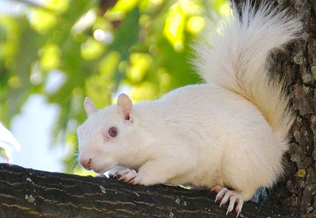 Étonnant : un écureuil albinos !
