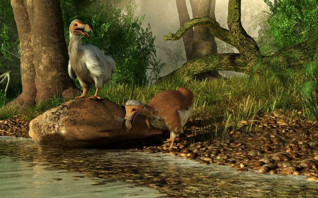 Animal disparu à la fin du XVIIe siècle et emblématique de l'île Maurice, le dodo peut-il revenir vivre sur ses anciennes terres ? © Daniel, Fotolia