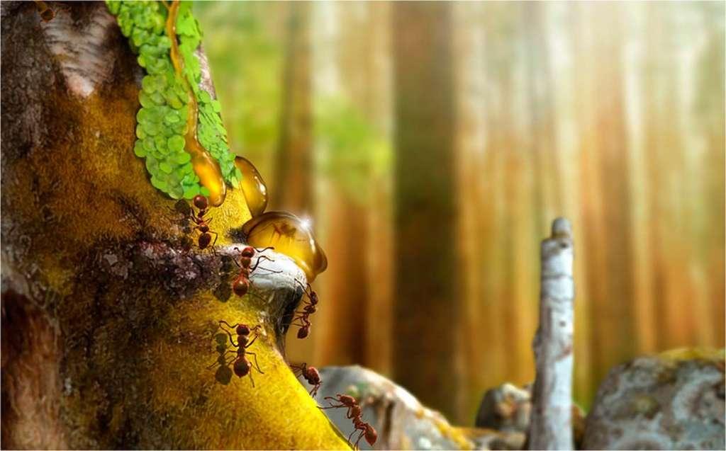 Reconstruction paléobiologique à partir des fossiles trouvés dans de l'ambre en Australie. Des fourmis Monomorium et de l'hépatique Radula sp. sur un tronc d'arbre résineux. © J.A. Penas, Scientific Reports