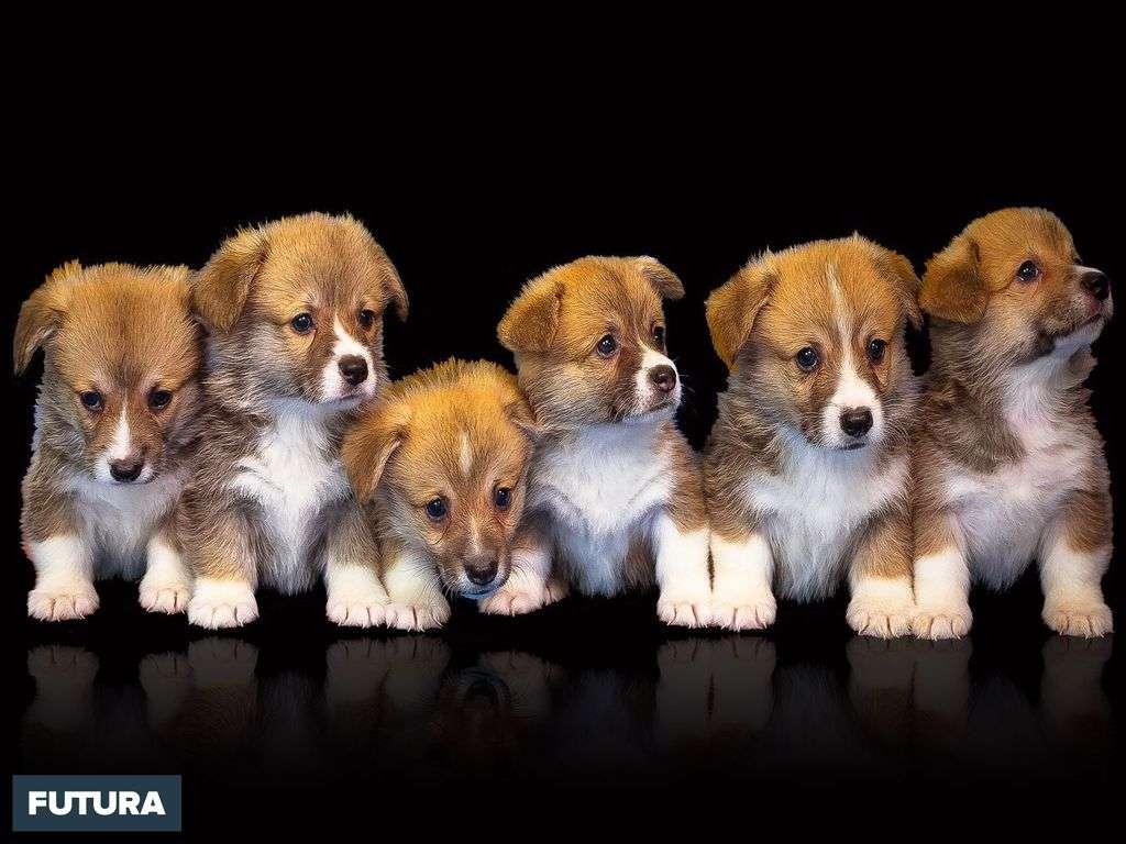 Ce qu'il y a de meilleur dans l'homme, c'est le chien. Alexandre Vialatte