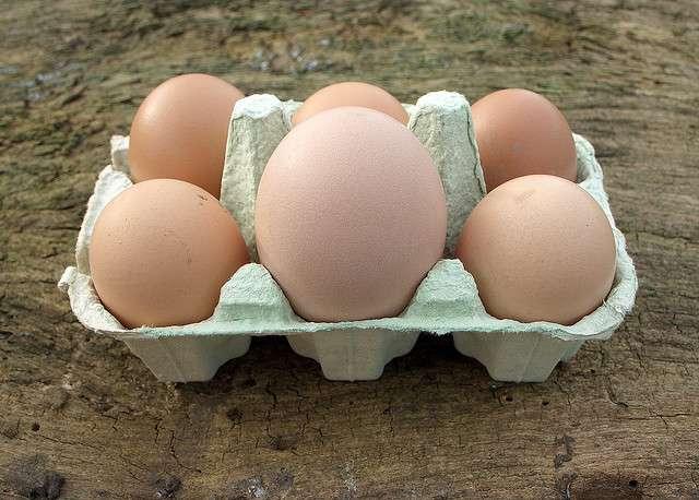 Les poules pondront peut-être un jour des œufs de dinosaure ! © James Morton, Flickr, CC by-nc-nd 2.0