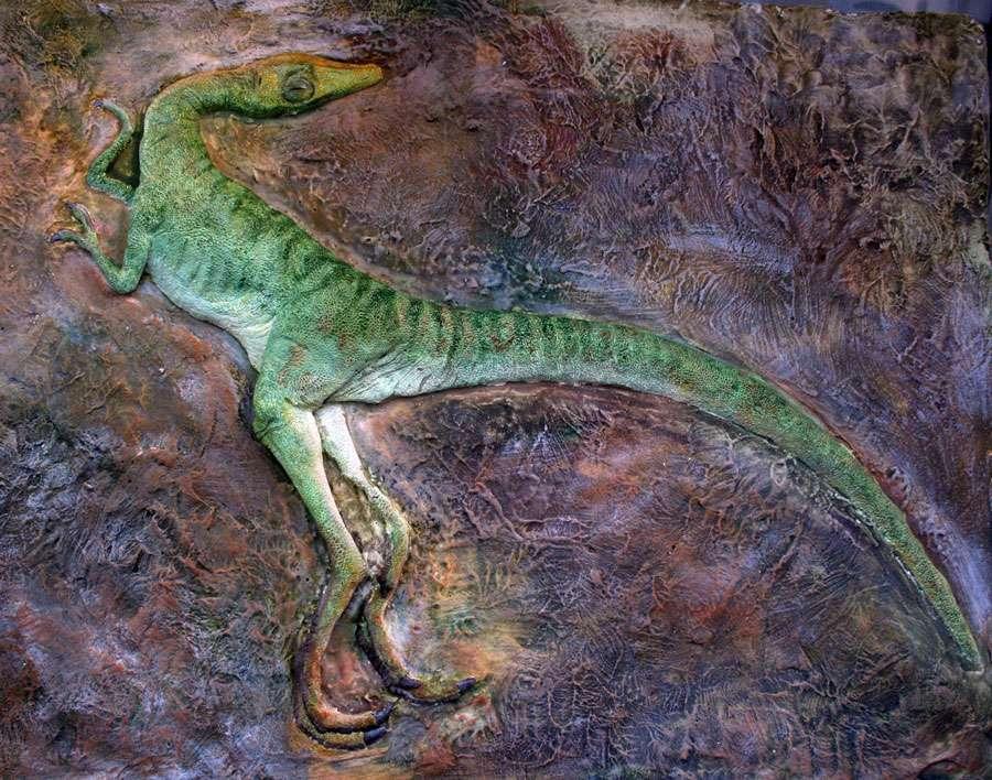 Compsognathus exposé au Musée d'Esparaza