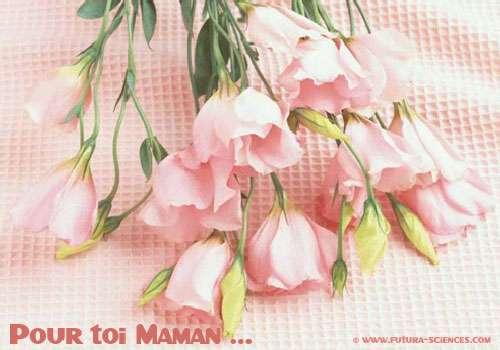 Pour toi Maman