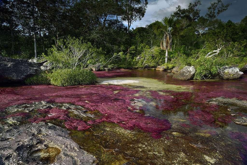 Caño Cristales : la rivière aux cinq couleurs