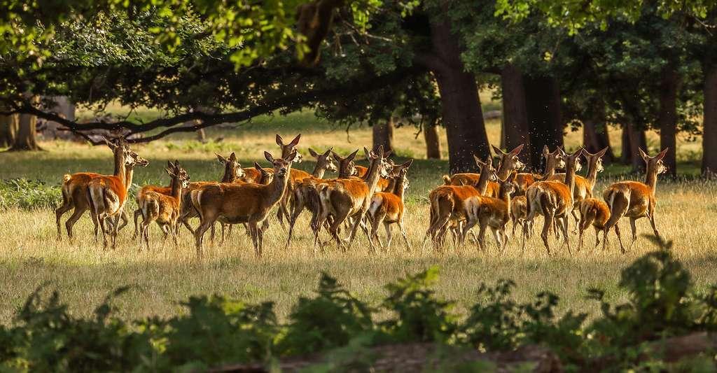 L'élevage de cerfs. © diego torres, Pixabay, DP