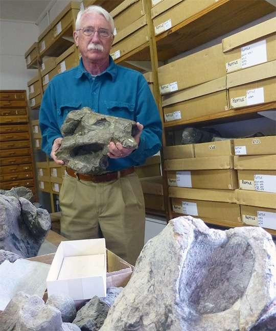 Robert Gastaldo du Colby College détient un crâne de Lystrosaurus maccagi, un tétrapode synapside du Permien tardif commun dans le bassin de Karoo, en Afrique du Sud. Le spécimen fait partie de la collection du Albany Museum, Grahamstown, Afrique du Sud. © R.A. Gastaldo
