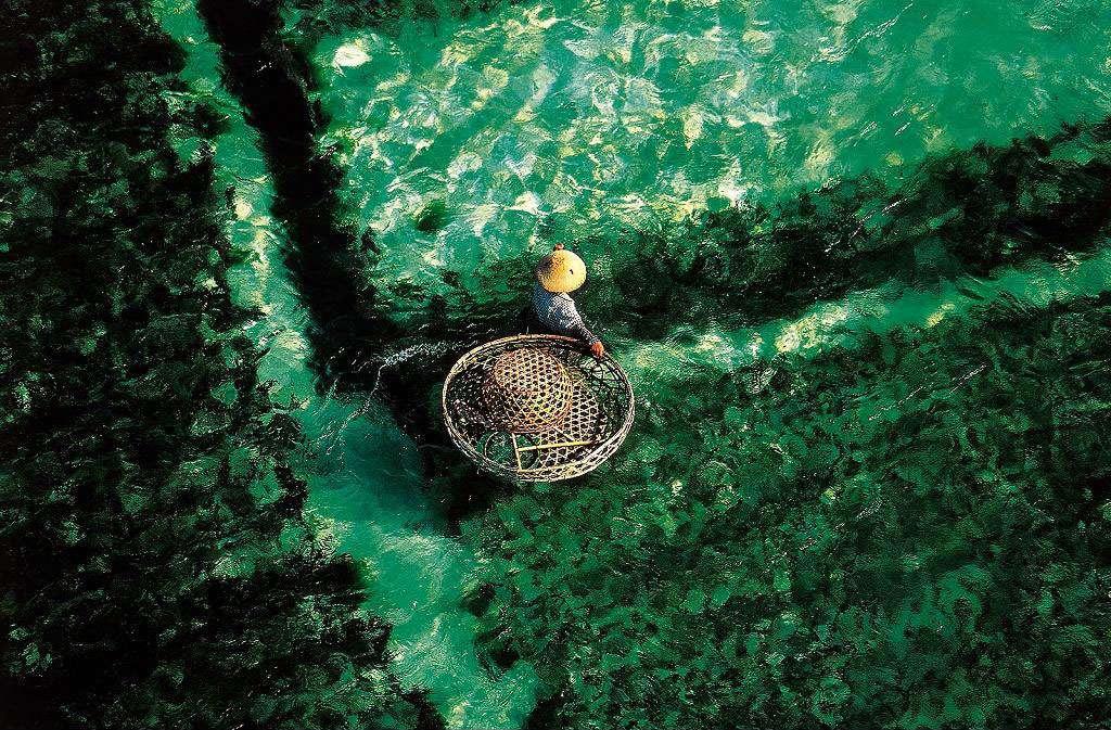 Récolte des algues, Bali, Indonésie (8°17' S - 115°06' E). L'eau étant susceptible, comme la terre ferme, de fournir des produits commercialisables, il suffit de remplacer l'ager (ou agri, le champ) par l'aqua (l'eau) pour passer d'une agriculture à une aquaculture, d'un élevage de volailles à une exploitation piscicole. © Yann Arthus-Bertrand - Tous droits réservés