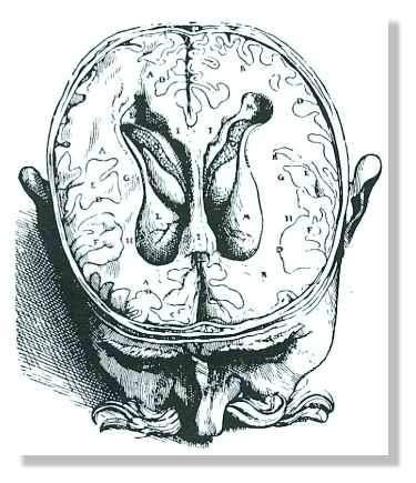 Représentation des ventricules cérébraux du cerveau humain, à l'époque de la Renaissance. Ce schéma est reproduit d'après De numani corporis fabrica, de Vésale (1543). Le sujet fut probablement un condamné à mort décapité. L'auteur a apporté une grande attention à la description anatomique exacte des ventricules cérébraux. © Finger, 1994, Fig. 2.8