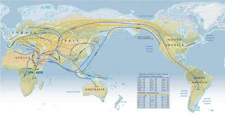 Cliquer sur l'image pour l'agrandir. Schéma des grandes migrations humaines depuis l'aube de l'humanité, parties d'Afrique de l'est, et obtenu par l'étude des chromosomes Y (lignes bleues) et de l'ADN mitochondrial (en jaune). Selon ce schéma, hormis les chasseurs-cueilleurs d'Afrique australe (les San), toute l'humanité descend d'un même groupe ayant quitté l'est de l'Afrique il y a 60.000 ans, là où ont dû vivre une « Eve africaine » et un « Adam africain ». L'Asie du sud est atteinte il y a environ 50.000 ans. Entre 40.000 et 35.000 ans, des hommes s'aventurent jusqu'en Sibérie... en pleine époque glaciaire. Entre 20.000 et 15.000 ans, Homo sapiens fait son apparition sur le continent américain en profitant d'un passage entre Sibérie et Alaska, permis par la baisse du niveau de la mer. Aujourd'hui, ces migrations se traduisent par la répartition des haplogroupes. © National Geographic Map