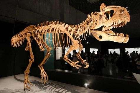 Cryolophosaurus. © Kabacchi, Flickr, CC BY-SA 2.0