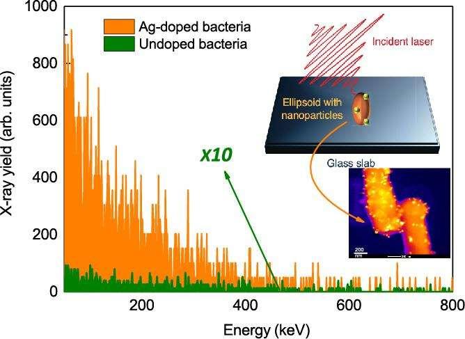 En ordonnée l'intensité des rayons X émis par des bactéries soumises à des impulsions lasers dans l'infrarouge et en abscisse l'énergie des photons laser en milliers d'électrons-volts. Les émissions des bactéries dopées avec des nanoparticules d'argent (Ag) sont en orange, celles sans ces particules sont en vert. © Tata Institute of Fundamental Research