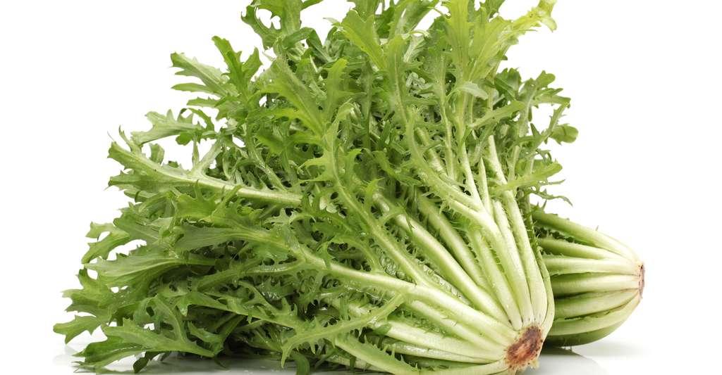 La chicorée frisée est une salade très digestive. © Jiang Hongyan, Shutterstock